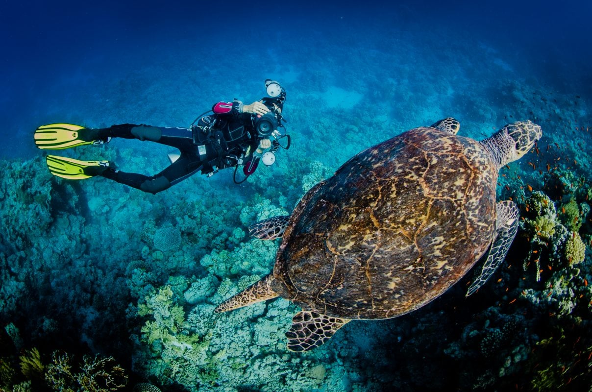 underwater image diver with camera and turtle top view