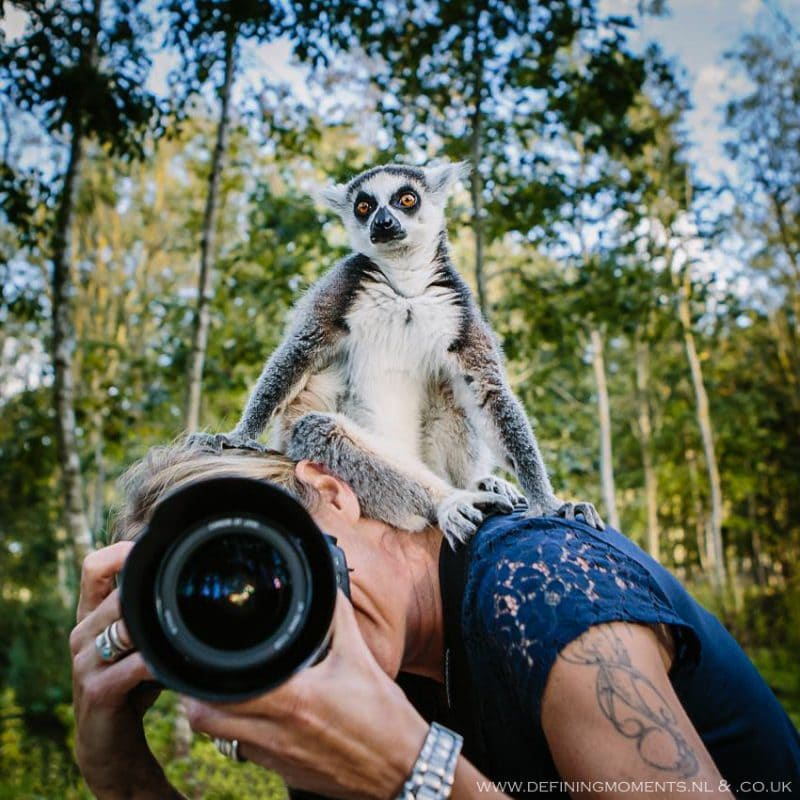 female photographer at work camera in front of face and ringtail maki sitting on head